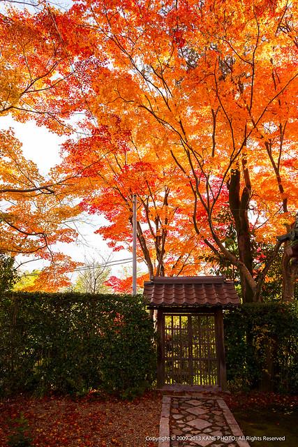 20121127-980C9837-源光庵