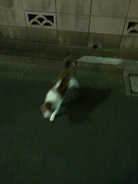 iPhone5sで撮影 谷中のネコ 2013年11月20日