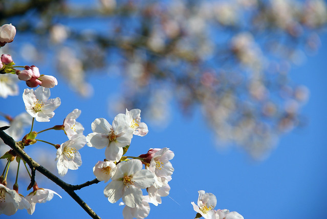 写真_確実に春2