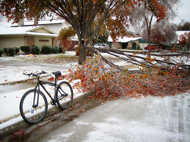 Tree Damage