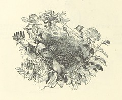 Image taken from page 30 of 'Illustrated Poems and Songs for Young People. Edited by Mrs. Sale Barker'