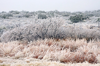 West Texas Ice