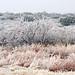 West Texas Ice