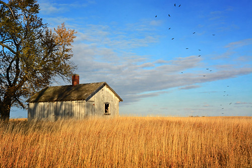 autumn fall abandoned birds nikon decay farm country iowa