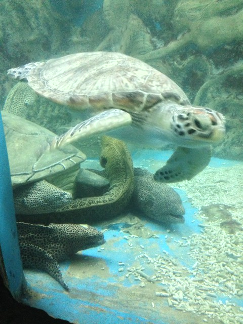 Turtle and eels at Tri Nguyen Aquarium Flickr - Photo Sharing!