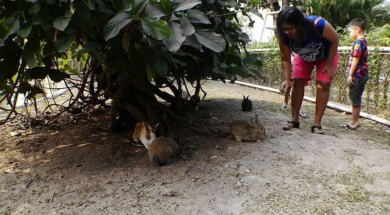 wonder farm pattaya