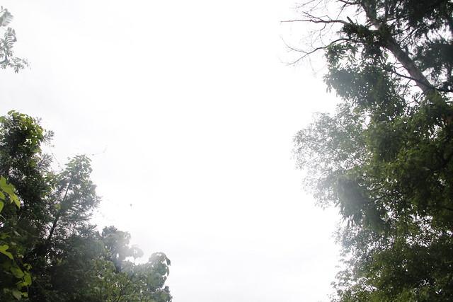 「キョロ,キョロ,キョロ」と鳴きながら飛ぶアカショウビンを上空に見つけた.