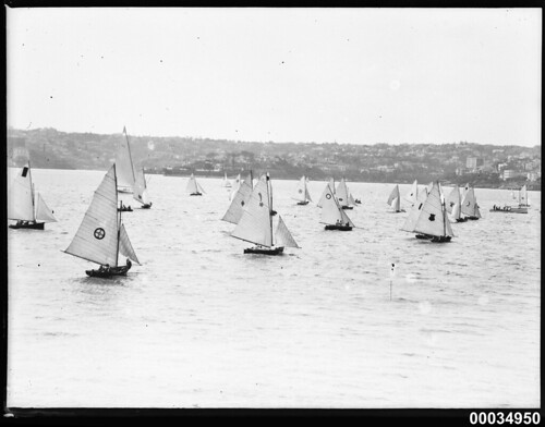Regatta on Sydney Harbour