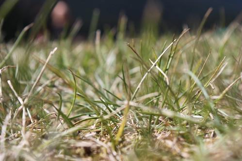 park nature grass ground smallworld explorebc explorecanada