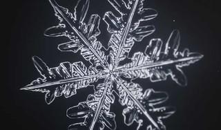 これが「雪の華」の開花!!雪の結晶ができる様子をとらえたタイムラプス映像が美しい!!