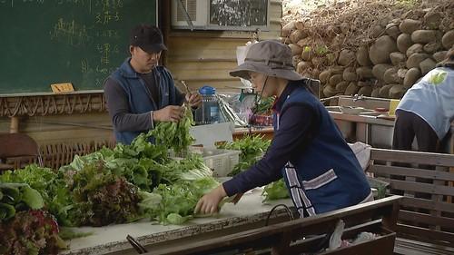 目前千甲農場有50個支持家庭,農場每個禮拜配菜3天。