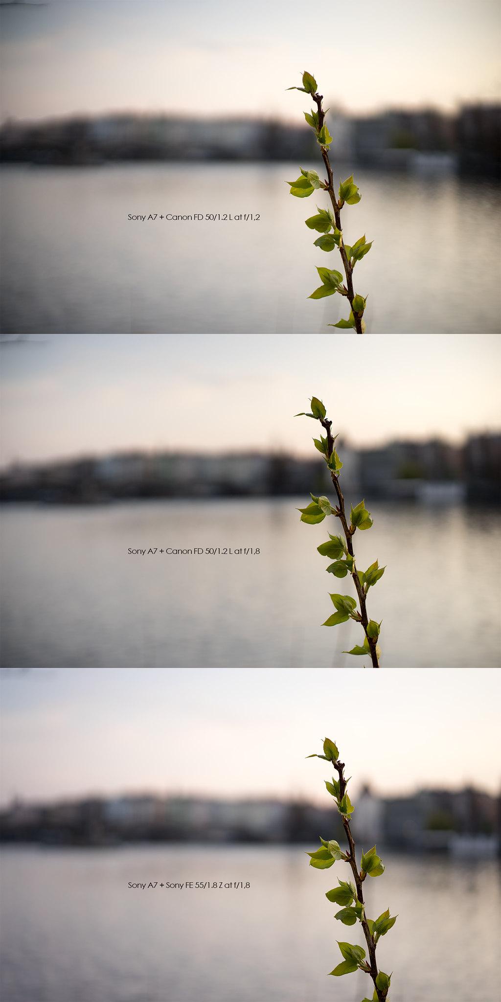 Sony FE 55mm f/1 8 Z vs Canon FD 50mm f/1 2 L | Verybiglobo photo