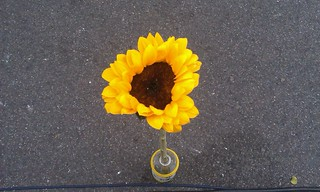 Lonely Morning Sunflower