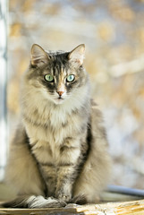 Gray cat sitting on a balcony with sunlight