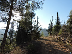 Ilan forest