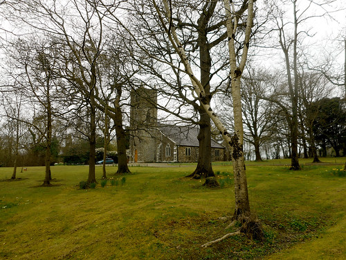 kiltennel churchofireland courtown wexford ireland green flowers daffodils trees