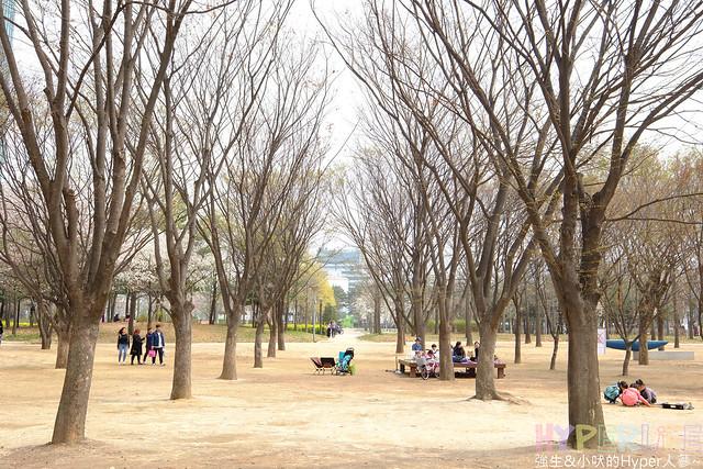 首爾林seoul forest (7)