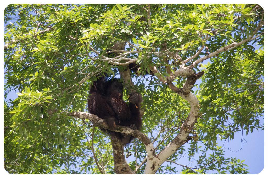 Borneo-20170411-IMG_7570