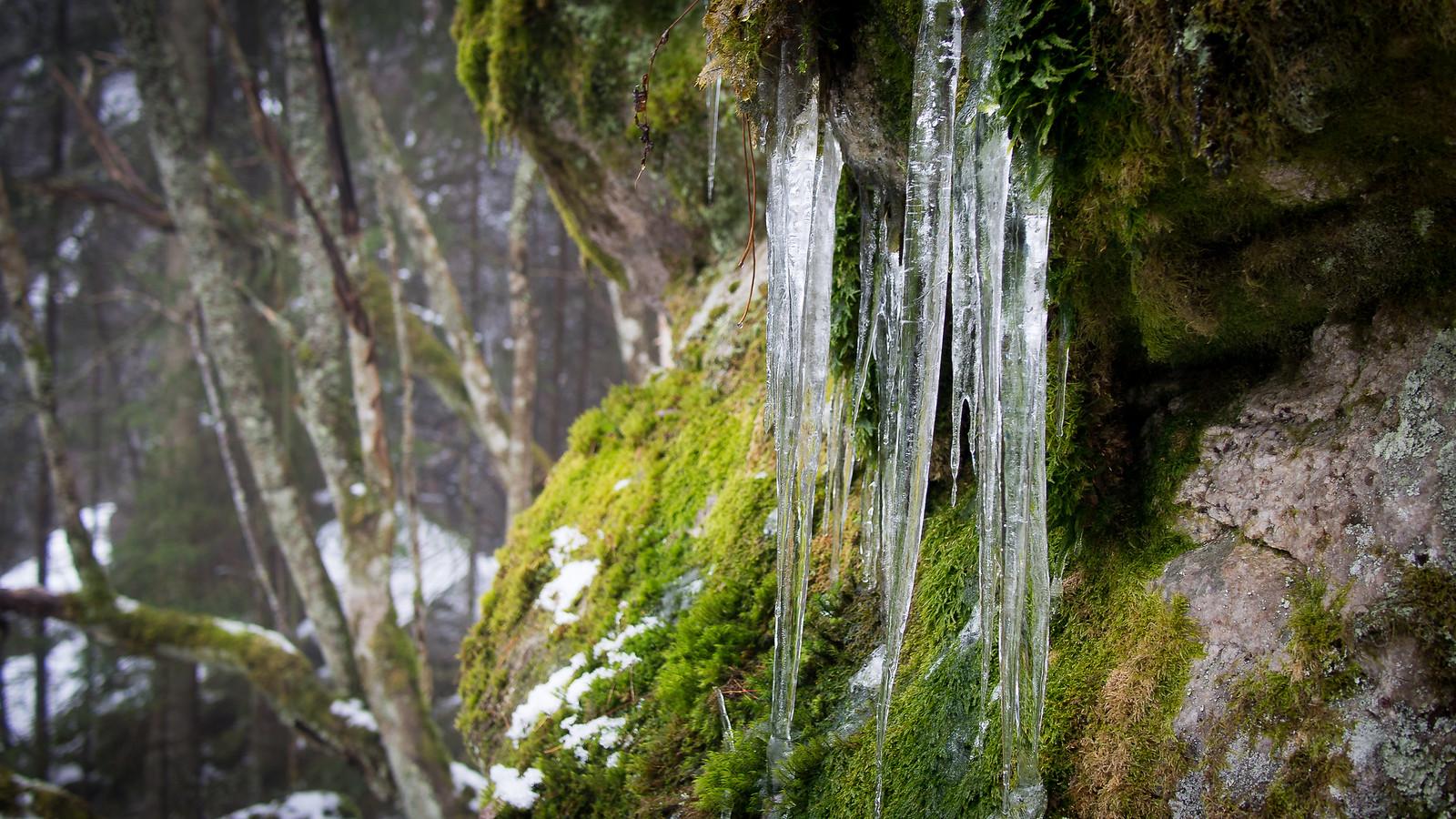 Jääpuikot sammaleisessa kalliossa