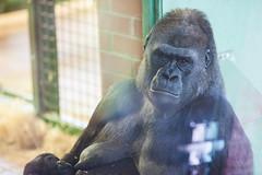 twycross zoo  -3048