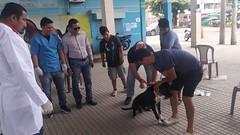 Campaña de vacunación canina en Canuto