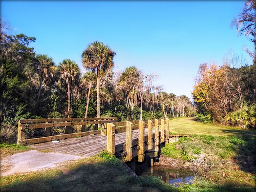 bridgeinbushmanpark scenic bridge outdoors landscape bushmanpark portorangeflorida park plamtrees pathway bluesky