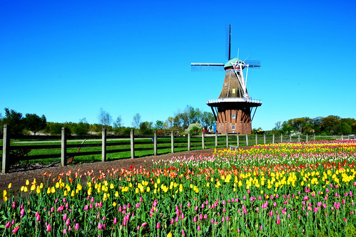 Windmill Park Holland Michigan