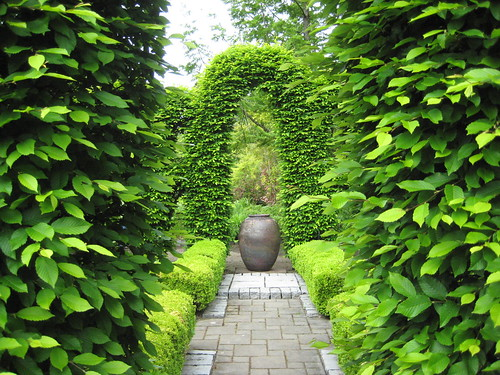 Carpinus hedge and arbor with container focal point