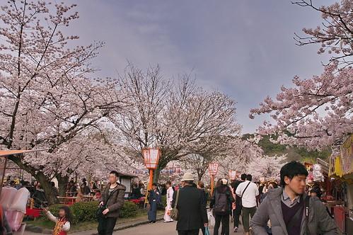 【写真】2013 桜 : 円山公園(2)/2020-11-17/IMGP9284