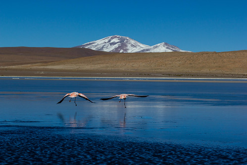 voyage travel wild mountain lake nature water montagne canon flamingo lac bolivia bolivie greatphotographers ringexcellence