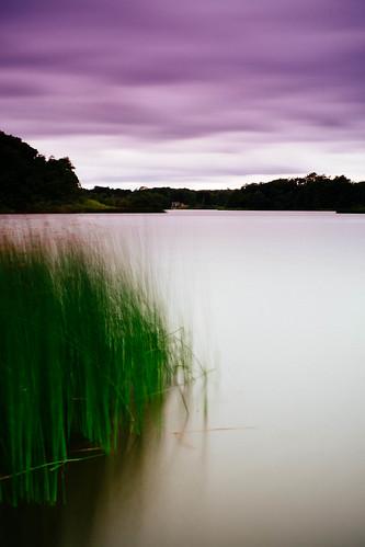 summer lake green reed skåne raw wind sweden july sverige 2013 skånelän tjörnarp xpro1 vsco tjörnarpssjön ffujivelvia50landscape
