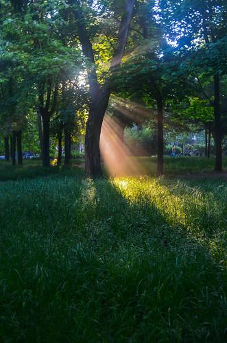 park morning summer green nature sunrise outdoors nikon odessa ukraine amateur україна beautifulearth украина nikon1855mm nikonnaturephotography