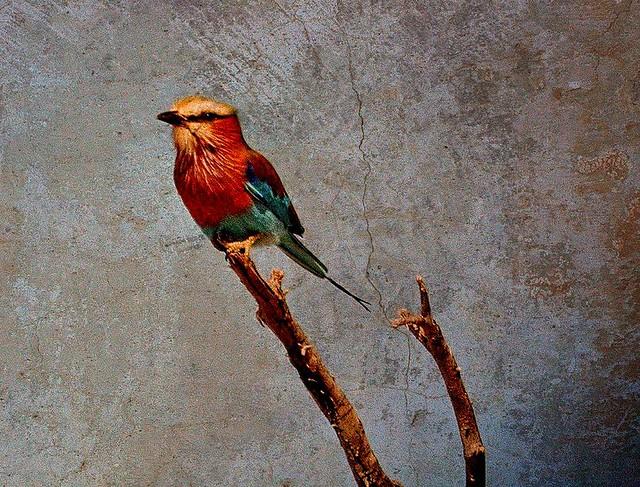 Namibia , Fotosafari 2004, Viewpoint, 68-41/2389