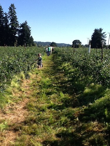 July 10 2013 Blueberry picking with Bunkers (9)
