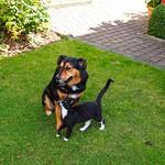 2013-09-16 um 13-47-28 - Hund & Katze