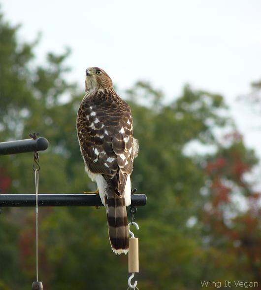 Psycho Hawk