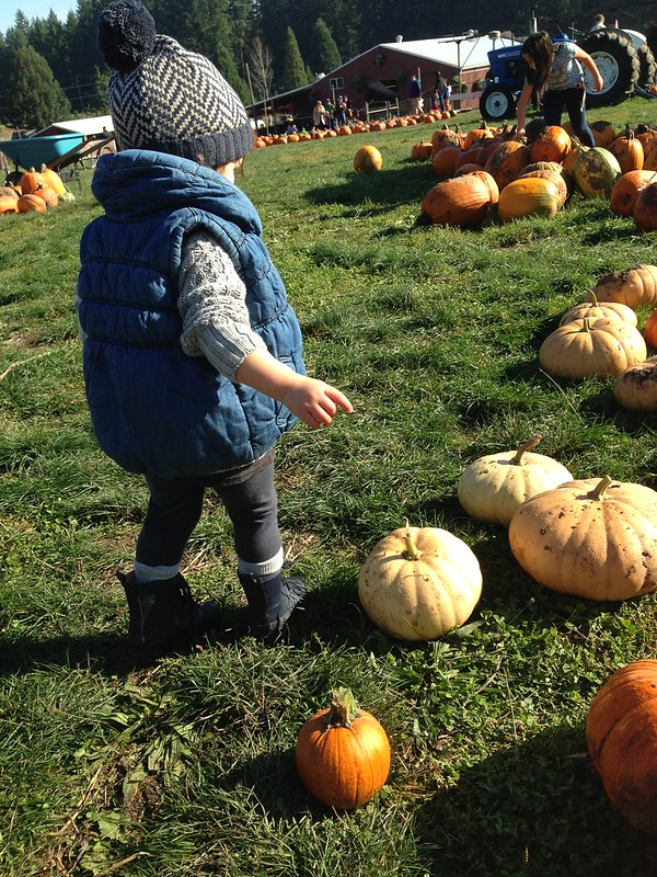 Pumpkin Patching Through the Years