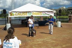 Cause for Paws 2013