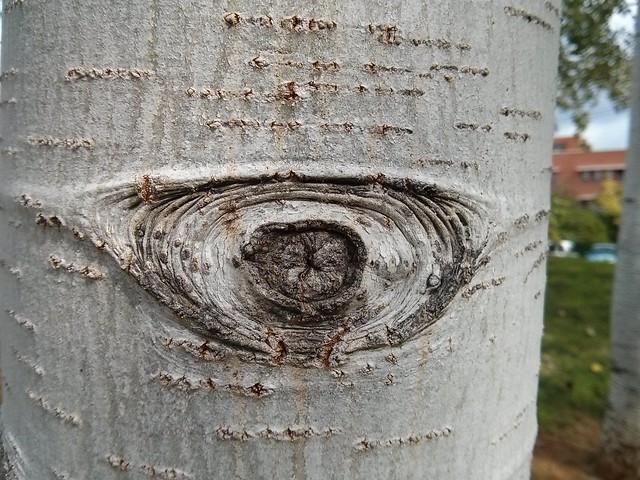 mirada tronco - pareidolia