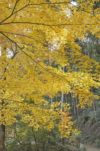 【写真】2013 紅葉 : 浄瑠璃寺/2019-08-22/IMGP3545