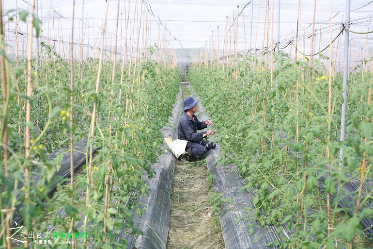 綠翠微農場 (10)
