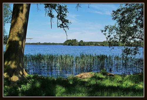 Deutschland / Mecklenburg-Vorpommern / Cambser See bei Zittow
