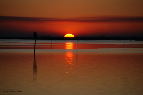 ocean sunset red sky orange sun beach nature water birds florida shellpoint