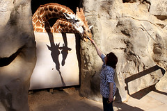 Taronga Zoo Roar & Snore 2014