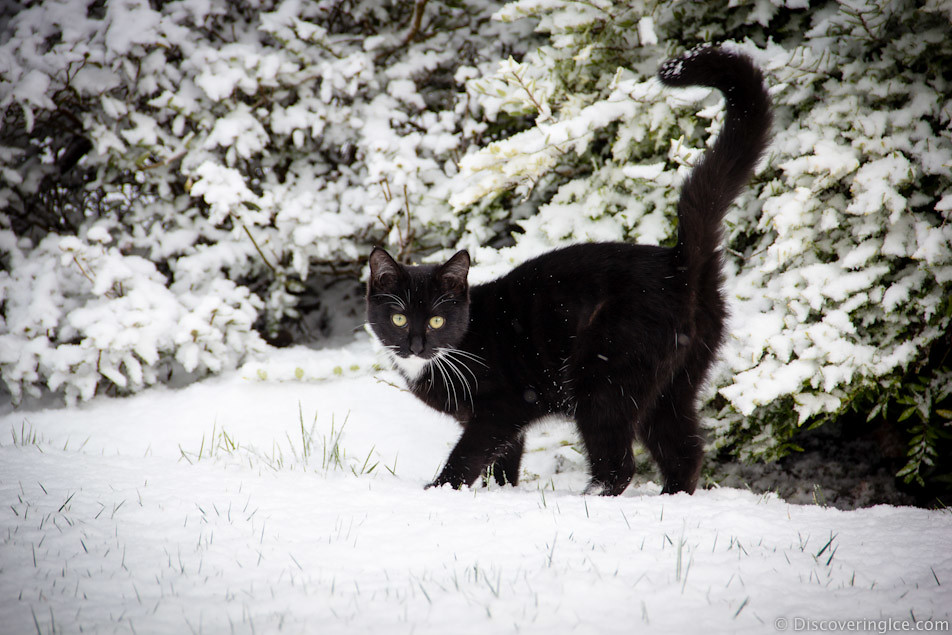 cat in the snow 2