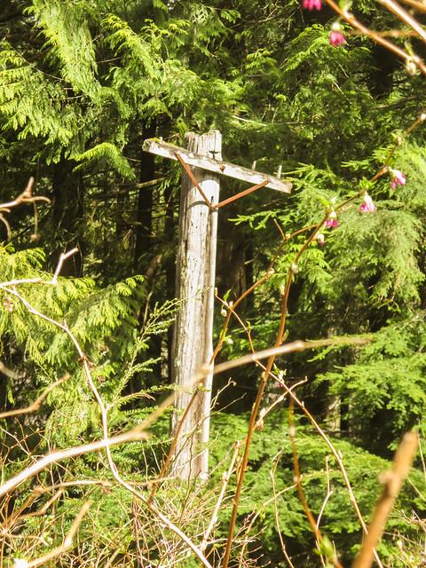 Old hydro pole