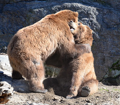Bear Hugging
