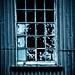 Window by borealnz