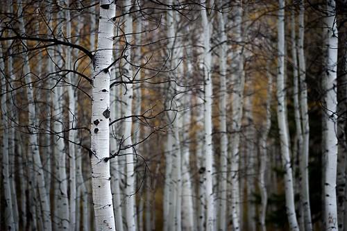 autumn leaves landscape forest nature travel roadtrip fall utah
