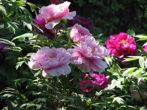 Roses last May